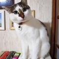 Photos: 僕って可愛い?