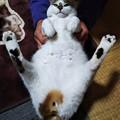 Photos: V字開脚