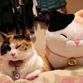 Photos: 姉妹誕生