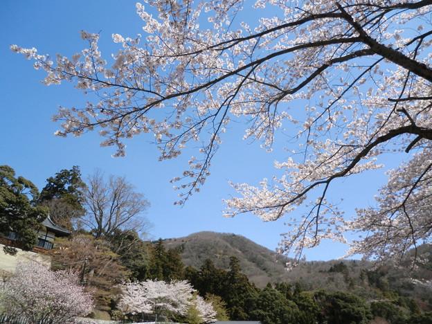 山寺の春1