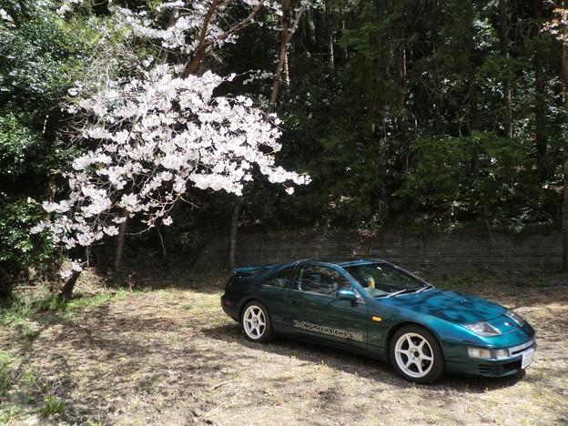 桜の下の貴婦人