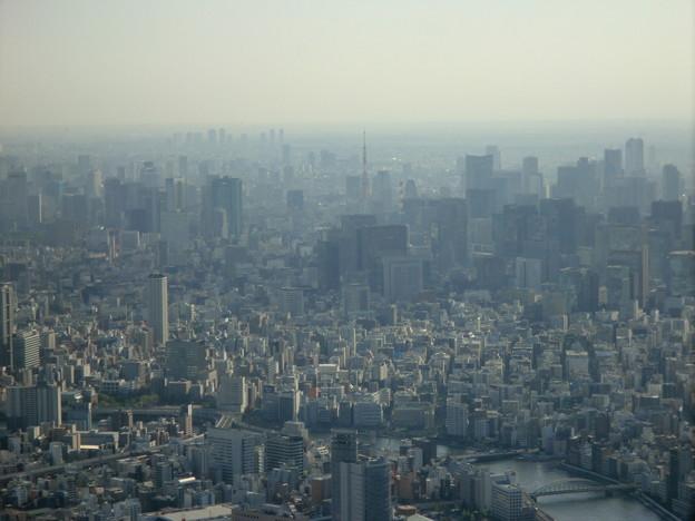Photos: 大都会