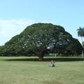 Photos: ハワイ モアルナガーデン