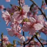 桜トレック(暫く休憩)
