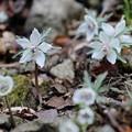 Photos: もうすぐ春