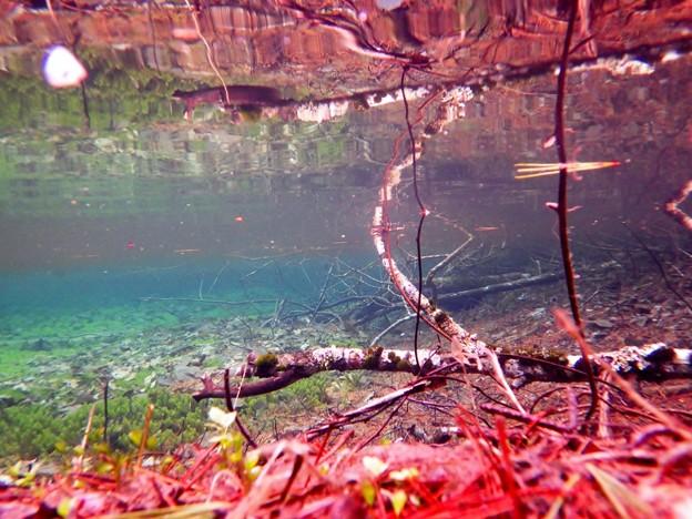 Photos: 小さな沼の中