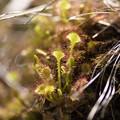湿原の芽吹き