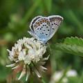 写真: 蝶の季節(ヒメシジミ)