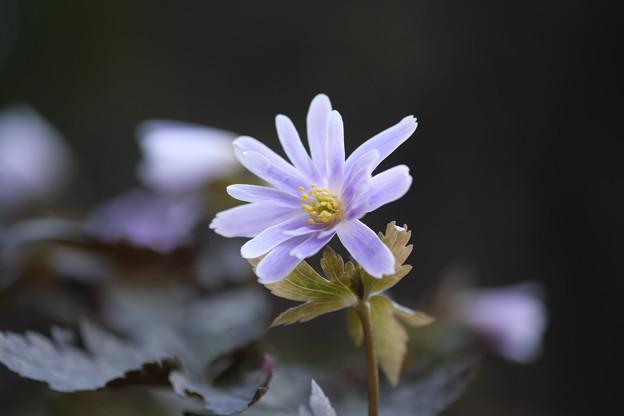 写真: 一華の花