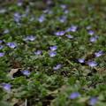 写真: 春が来た