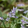 写真: 春の花