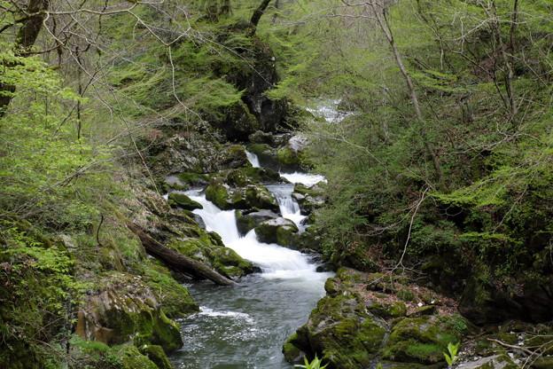 写真: 新緑の帝釈峡 断魚渓