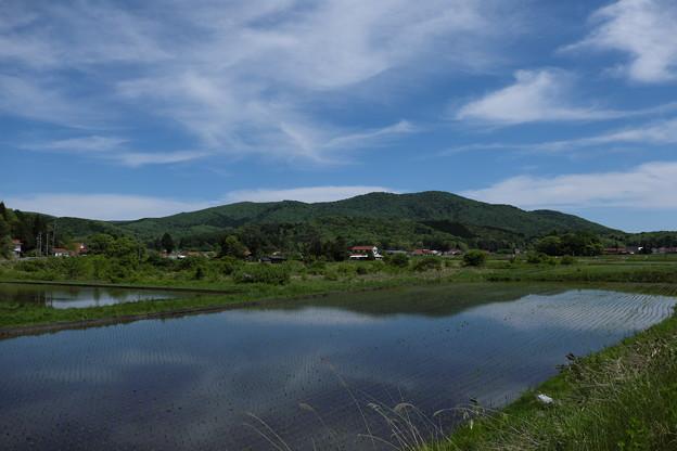 八幡高原の初夏