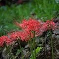 Photos: 季節の花