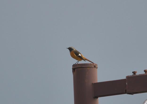 冬鳥の季節