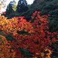 写真: 三段峡の秋(1)