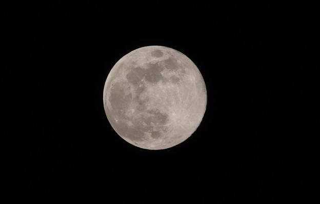 平成最後の満月(ピンクムーン)