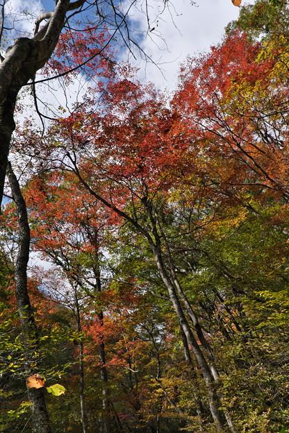 秋の散策(2)