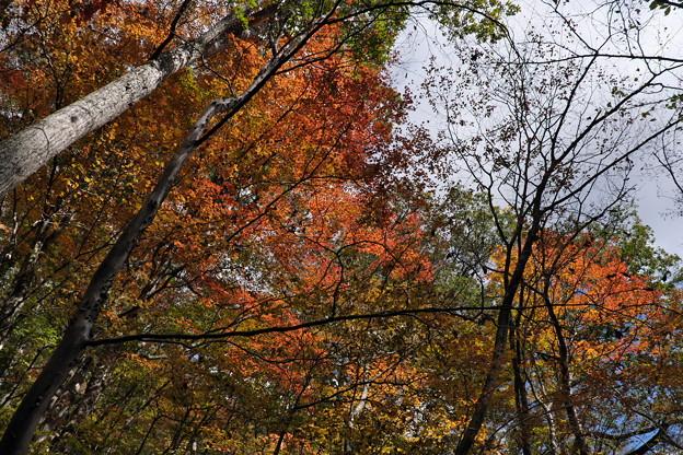 秋の散策(3)