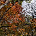 Photos: 秋の散策(3)