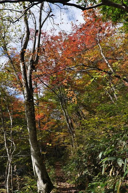 秋の散策(1)