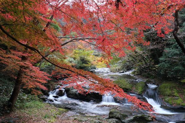 秋染まる流れ