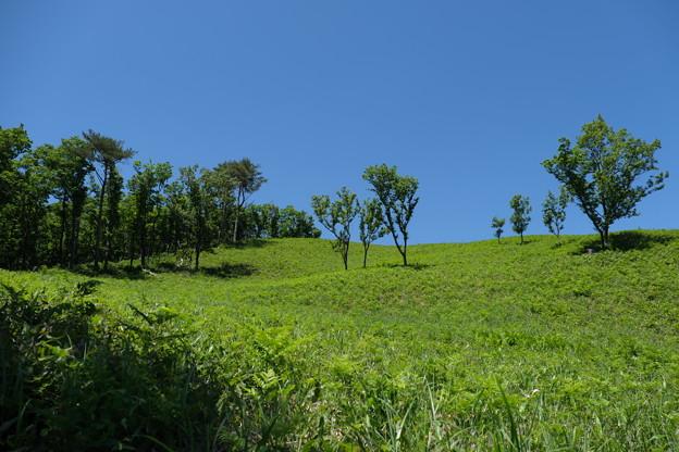 高原の風景(1)