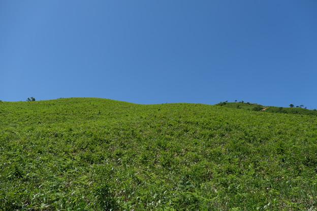 高原の風景(2)