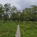 霧ヶ谷湿原の風景