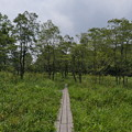 Photos: 霧ヶ谷湿原の風景