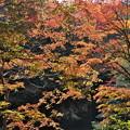 Photos: 秋の三段峡(2)