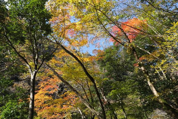 秋の三段峡(3)