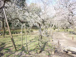 20100319老木
