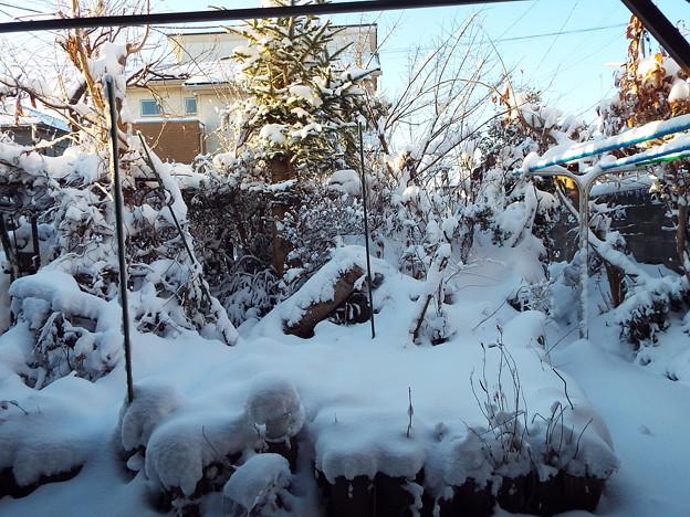 1801230004庭の雪