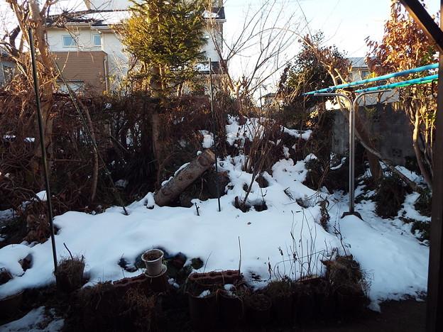 1801260001庭の残雪