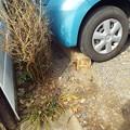 写真: 車止めビワの木1802220005