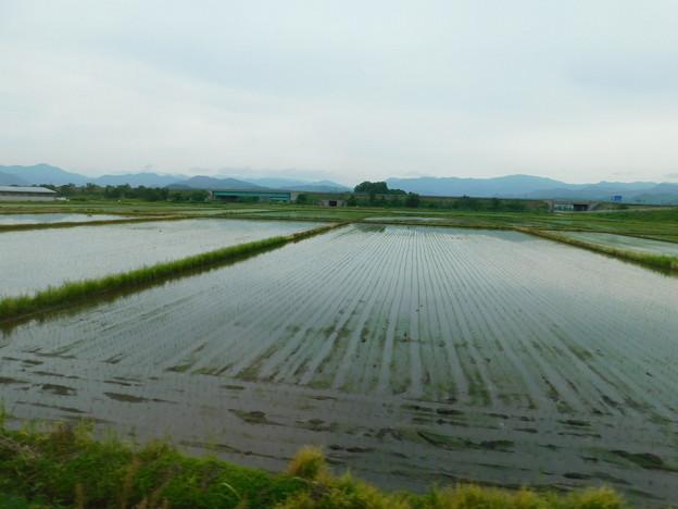 田んぼDSCN1729