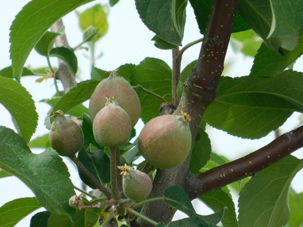 リンゴかDSCN1756