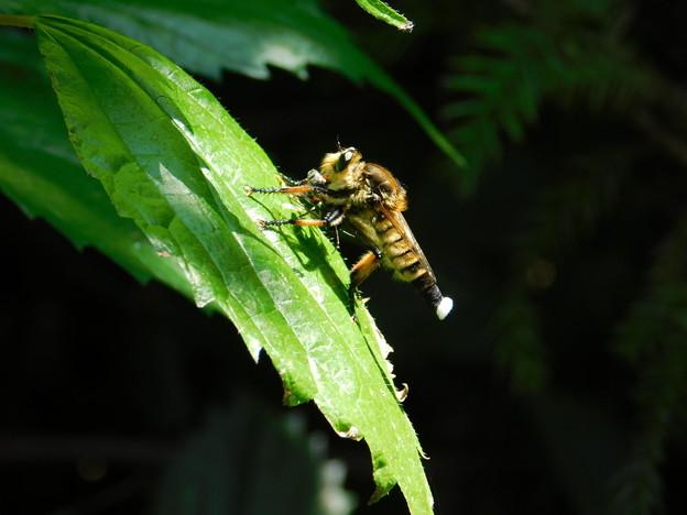 ハチ?DSCN5762