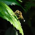 写真: ハチ?DSCN5762
