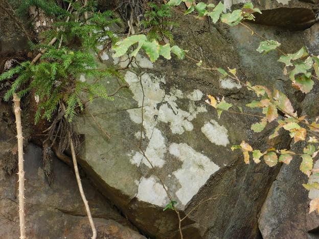 DSCN2192岩のコケ