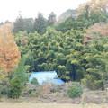 DSCN2209紅葉と竹林