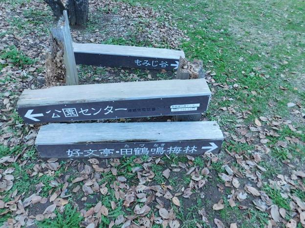 もみじ谷案内DSCN2863