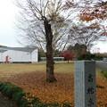 DSCN2792イヌザクラ@徳川ミュージアム玄関