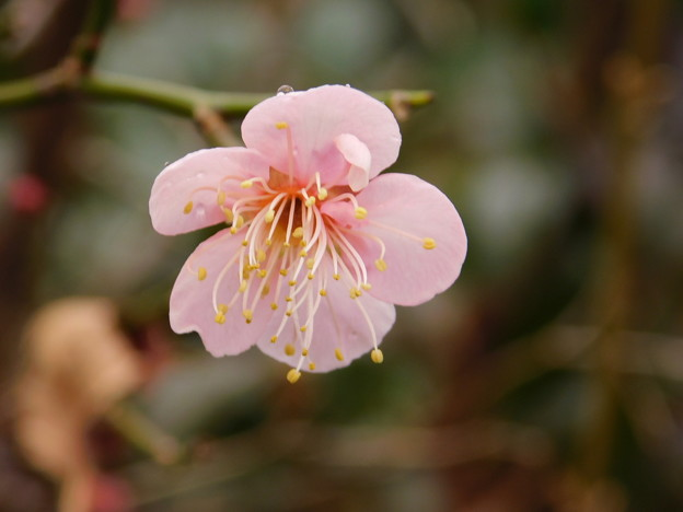 紅冬至・庭DSCN5980