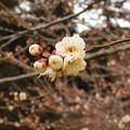 Photos: 虎の尾SY2-046DSCN6298