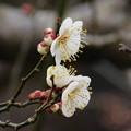 Photos: 芳流C10-003DSCN6403