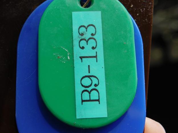 緑萼B9-133なのに月影DSCN6630