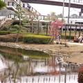 Photos: 鹿児島紅C8-1403DSCN7224