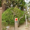 Photos: 泰平D4-011DSCN1775
